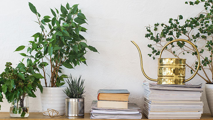 Decorate with books and plants